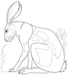 Desert Hare Coloring Page - Free Coloring Pages Online Bunny Coloring Pages, Pattern Coloring Pages, Free Printable Coloring Pages, Colouring Pages, Adult Coloring, Freehand Machine Embroidery, Free Motion Embroidery, Hare Pictures, Rabbit Art