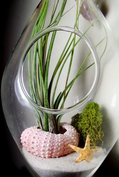Hanging Air Plant Terrarium With Sea Urchin and Star by Plantzilla, $25.00