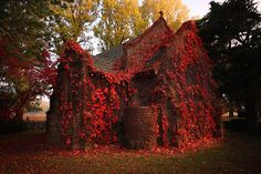 "Like a scene in the 2005 movie, ""War of the Worlds"", blood red vines cover this abandoned church in autumn. Photo by *CainPascoe From Francesco Mugnai's blog, ""33 more breathtaking and incredible photos of abandoned places."""