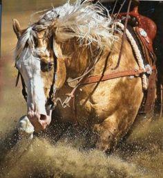 Big Tex To Cash, legendary horse in reining