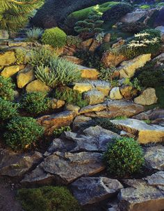Rock Gardens - select plants that grow well in your climate