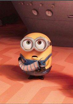 Minions what, minions bob, cute minions, minion jokes, minions despicable m Minions What, Minions Fans, Cute Minions, Funny Minion Memes, Minions Despicable Me, Minion Toy, Minion Theme, My Minion, Funny Emoji Faces