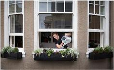 The Novice Gardener: Is It Safe to Grow Food in Urban Soil?