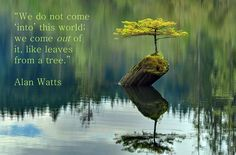 "We do not ""come into"" this world; we come out of it, as leaves from a tree. As the ocean ""waves,"" the universe ""peoples."" Every individual is an expression of the whole realm of nature, a unique action of the total universe. ~ Alan Watts www.pantheism.net"