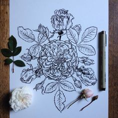 drawing roses tattoo