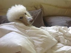 Say hi to Chanel... Sleeping in... Does your fur friend like to sleep in on cool mornings?