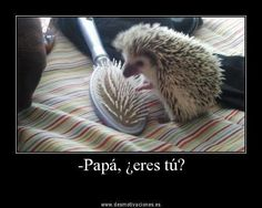 16 Reasons Hedgehogs Are Better Than Politicians - Funny Animal Quotes - - Amazing Creatures: 30 Funny animal captions part 8 pics) The post 16 Reasons Hedgehogs Are Better Than Politicians appeared first on Gag Dad. Really Funny Memes, Stupid Funny Memes, Funny Relatable Memes, Funniest Memes, Funny Humor, That's Hilarious, 9gag Funny, Memes Humor, Crazy Funny Pictures