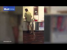 Adorable kangaroo joey clings to man's leg and jumps for milk - YouTube