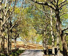 Alrededores lago castiñeiras.  Pontevedra