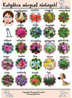 Dream Garden, Home And Garden, Wallpaper Nature Flowers, Succulents Garden, Animals And Pets, Dog Food Recipes, Pergola, Herbs, Plants