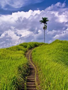 Campuhan Ridge Path - Bali, Indonesia
