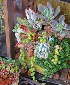 Les plantes succulentes subliment le jardin ! nafeusemagazine.com