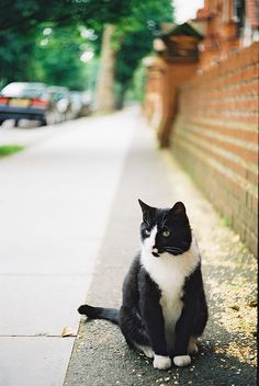 tuxedo kitteh...you don't belong on the street;  come home to me (Cat Lady)