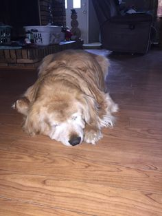 This good ol boy is 12 years old. He's mostly deaf and blind. Every time I visit he makes sure to give me a nice welcome. http://ift.tt/2sBuElJ