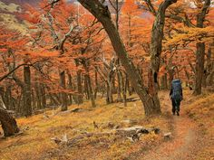 Patagonia: profondo sud - A tutto trekking  - Traveller Cards