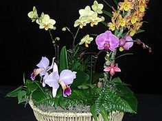 I love orchids.