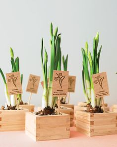 Here, budding bulbs bought from a local nursery are nestled into sake cups beneath beds of rocks. To turn them into take-home favors, use a rubber stamp to imprint planting instructions onto wooden posts. If you prefer dormant bulbs, buy them online in the fall.