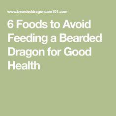 6 Foods to Avoid Feeding a Bearded Dragon for Good Health