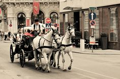 horse taxi in Vienna