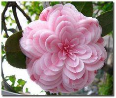 Pretty PinkFlower