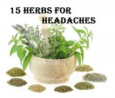 15 Herbs for Headaches, with links on how to grow