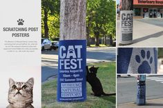 Museum of Natural History: Cat fest
