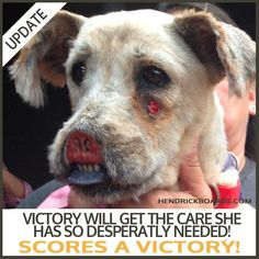 "**VICTORY Update** Following a nearly 5 hour long trial between Hutto Police and the original ""owners"" of the dog we know as Victory, a Texas judge ruled that Victory will not be returned to her original owners, and shall remain under the care of Austin Pets Alive! This means that they can now move forward with her reconstructive surgery! Share the good news!!"