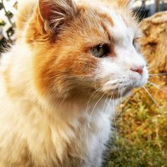 Got him when I was three. He was the same age. I named him Buttons. We're now both 18, to this day he is the friendliest and most loyal cat I know. He can no longer hear, and is a bit slower, but he's the same loyal cat I adopted so many years ago. - more at megacutie.co.uk