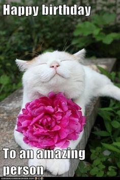 Happy Birthday Wünsche, Cat Birthday Memes, Birthday Wishes Flowers, Birthday Wishes For Friend, Birthday Quotes For Him, Birthday Wishes Funny, Birthday Msg, Birthday Humorous, Birthday Blessings