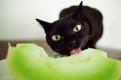 """I love melon because it matches my eyes.""  Photo via Chuckles"
