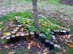 Recycling wine bottles - star