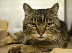 Meet Hunter: Hunter came to us as a stray on 3/12 with bite wounds of an unknown origin.  Due to these bite wounds, he will require a 6 month in-home isolation period.  This handsome guy is as sweet as pie, and would love to come home with you! Please help him today.