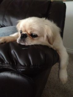 Bentley AKA Bubbers.... just hanging out!