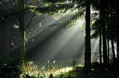 Thüringer Natur verzaubert