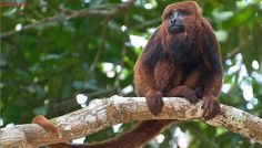 Estudo conclui que 54 espécies estão sob risco crítico de extinção na Bahia