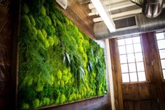 Les tableaux de végétations vivantes de Erin Kinsey - 2Tout2Rien