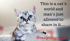 This is a cat's world and man's just allowed to share in it! @easyologypets
