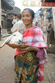 woman with head of a sacrificed goat during dashein festival time in Bhaktapur,