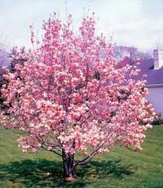 Durning the ceremony instead of lighting a unity candle I want to plant a Pink Dogwood Tree. We plan to have the ceremony at our home in the country <3