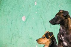 Dogs in Baires Inspired, Animals, Inspiration, Art, Pets, Photos, Biblical Inspiration, Art Background, Animaux