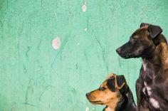 Dog Portrait - Mascota Foto - BA