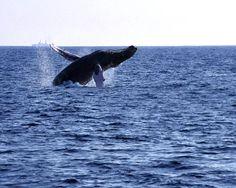Whale watch in Oahu.
