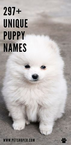 It can be truly hard to discover the most unique puppy names, yet we are below to help your search end with a name that will fit your pet perfectly. Great Unique Puppy Names for your furry friend. Pick the best name like Lilith, Sonic, Lottie, Tilly, Ferry, Ziva, Finn, Shadow, Spark, Buddy! #UniquePuppyNames #PuppyNames Cool Female Dog Names, Puppies Names Female, Best Dog Names, Cool Names, Girl Dog Names, Pet Names, Pet Dogs, Dogs And Puppies, Pets