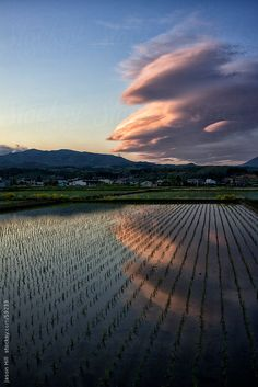Rice field #Iwate #Japan #JapanWeek  Subscribe today to our newsletter for a chance to win a trip to Japan http://japanweek.us/news  Like us on Facebook: https://www.facebook.com/JapanWeekNY