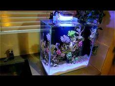 CORAL SALTWATER TANK NANO REEF AQUARIUM with LED MOD - YouTube