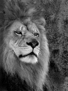 Le King by Kathleen Mendel