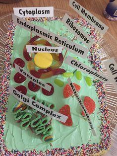 Celula vegetal maqueta con xuxes