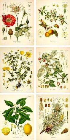botanical prints by Kim M Bejeck
