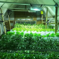 "@bluecreekacres on Instagram: ""#BlueCreekAcres #Hydroponics #HydroponicSystem #Colorado #RockyMountains #Telluride #Ridgway #Ouray #Farm #Farmington #Agricultural…"" Hydroponic Lettuce, Hydroponics System, Rocky Mountains, Acre, Colorado, Instagram, Aquaponics System, Aspen Colorado, Mornings"