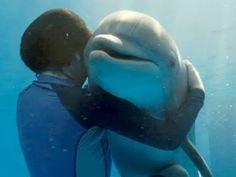 Dolphin Tale Movie Trailer